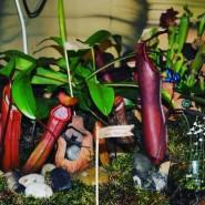 Выставка хищных растений фотографии