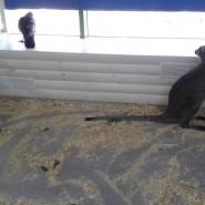 Трогательный зоопарк «Лапушки» фотографии