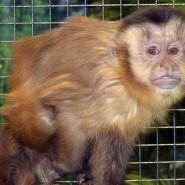 Выставка обезьян фотографии