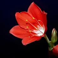 Спектакль «Аленький цветочек» фотографии