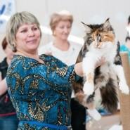 Выставка кошек «Магия Кошки» фотографии