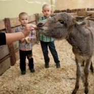 Контактный зоопарк «Лесное посольство» фотографии
