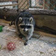 Контактный зоопарк  «Обнимашки» фотографии
