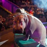 Премьера циркового шоу «Гиппопотамус» фотографии