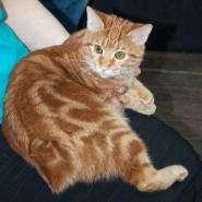 Международноя выставка кошек «МИР! МЯУ! МАЙ!» фотографии
