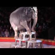 Шоу больших зверей братьев Гертнер в «МЕГЕ» фотографии