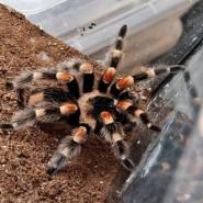 Выставка живых пауков фотографии
