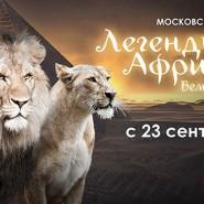 Представление Московского цирка «Легенды Африки» фотографии