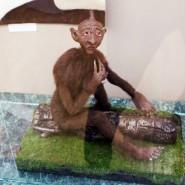 Выставка «Из глубины столетий. Сказки народов России» фотографии