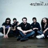 Концерт группы «Animal ДжаZ» фотографии