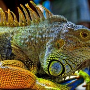 Выставка животных «Джуманджи» фотографии