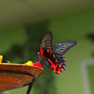 Выставка экзотических животных и тропических бабочек фотографии