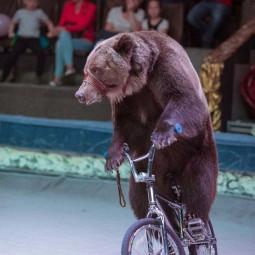 Представления Московского цирка Никулина с программой «Наш добрый цирк»