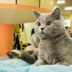 Выставка кошек «Котомания»