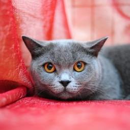 Выставка кошек «КОТопремия OSCAR»