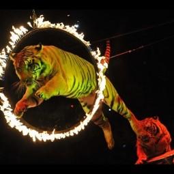 Новая цирковая программа «Zaltania. Затерянный мир»