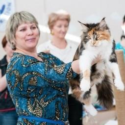 Выставка кошек «Магия Кошки»