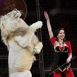 Представление Московского цирка «Легенды Африки»