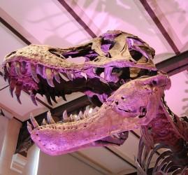 Программа «Время гигантов: когда динозавры правили Землей» в Планетарии