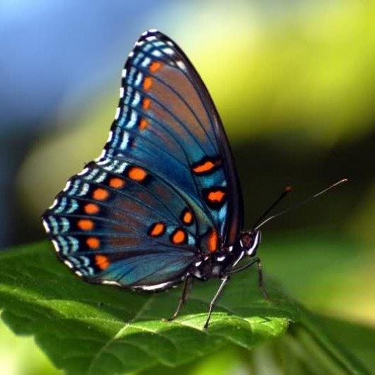 Выставка экзотических животных итропических бабочек