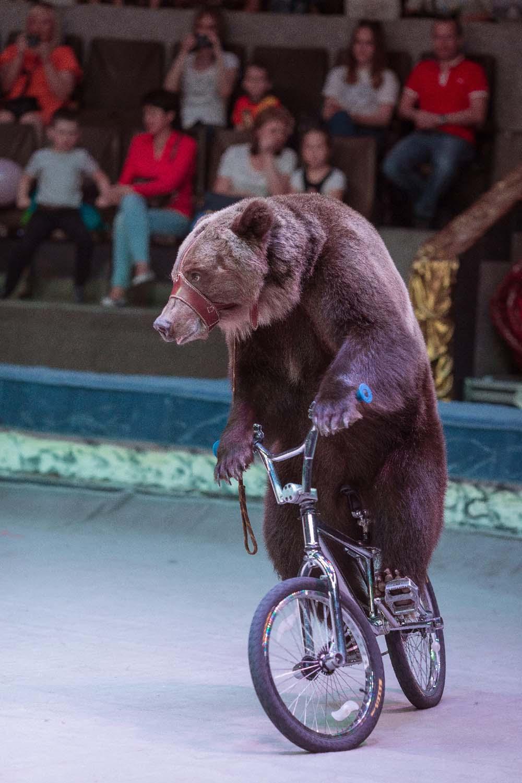 Представления Московского цирка Никулина спрограммой «Наш добрый цирк»