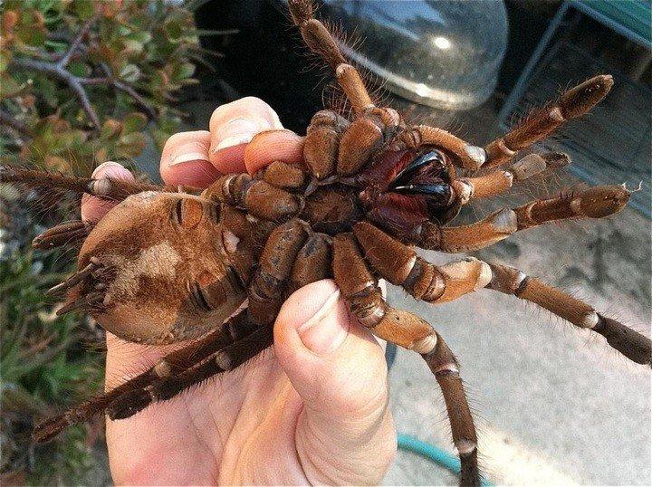 Выставка живых пауков