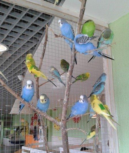 Трогательный зоопарк «Лапушки»