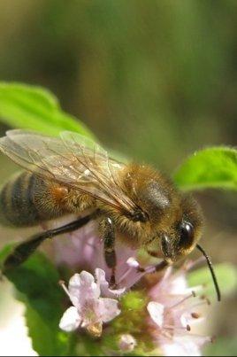 Экспозиция, посвященная бурзянской пчеле