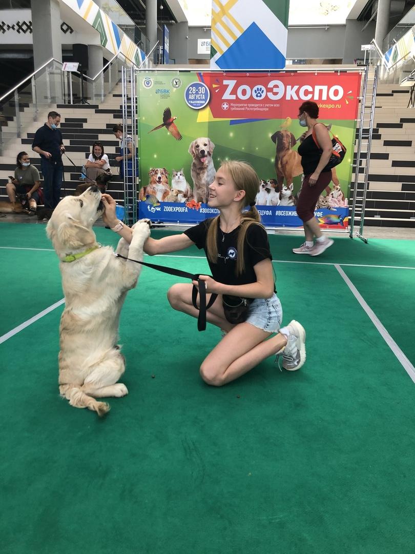 IVСпециализированная выставка зооиндустрии «ZооЭкспо»
