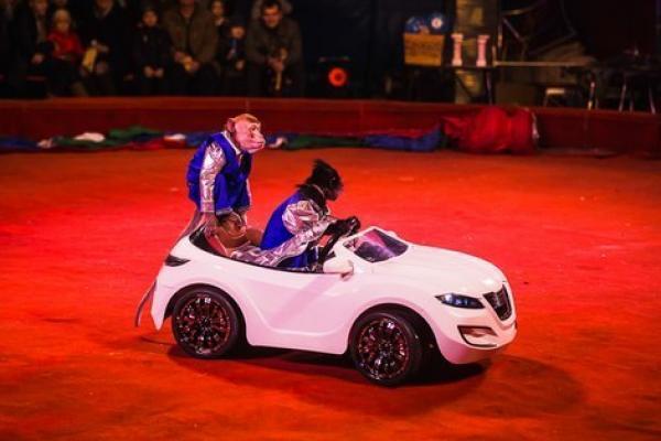 Большой Новосибирский Цирк «Золотой Дракон»