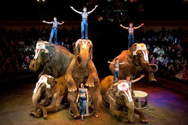 Шоу больших зверей братьев Гертнер в«МЕГЕ»