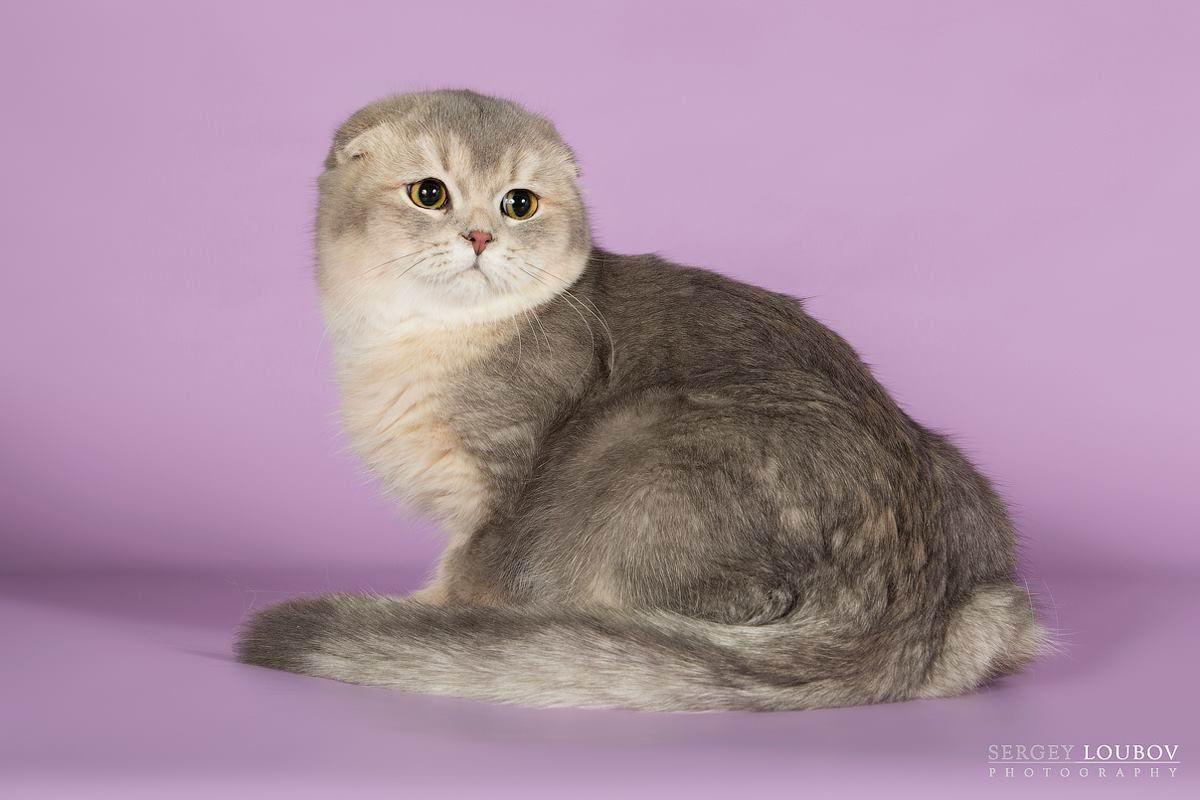 Международная выставка кошек «ОСЕННЕЕ ШОУ-2016»